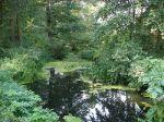 Miniatura zdjęcia: Rozlewisko rzeki Ilanki